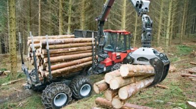 Процесс лесозаготовки